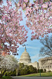 Gli Stati Uniti Campidoglio che costruisce nel Washington DC S.U.A. in primavera Immagini Stock Libere da Diritti