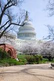 Gli Stati Uniti Campidoglio che costruisce in primavera Fotografie Stock