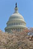 Gli Stati Uniti Campidoglio e fiori di ciliegia, Washington, DC Fotografia Stock