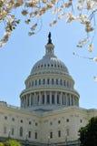 Gli Stati Uniti Campidoglio, Washington, DC Fotografie Stock
