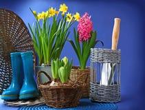 Gli stivali di gomma ed i fiori della sorgente sono in un canestro Immagine Stock