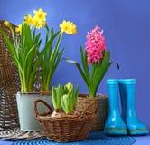 Gli stivali ed i fiori blu di gomma della molla sono in un canestro Fotografie Stock
