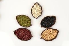 Gli strappi del lavoro, fagioli della soia, fagioli rossi, fagioli neri, arachide, pinolo, mandorla e fagiolini Immagine Stock