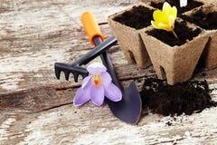 Gli strumenti di giardino spalano, rastrellano, vasi della torba su vecchio fondo di legno Fotografia Stock