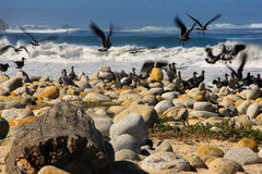 Gli uccelli Immagine Stock Libera da Diritti