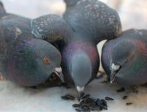 Gli uccelli Immagini Stock Libere da Diritti