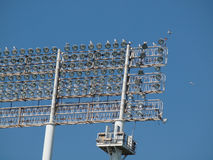 Gli uccelli del gabbiano riposano e volano intorno alle luci stile stadio Fotografie Stock