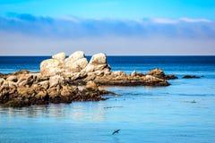 Gli uccelli di mare che riposano su una formazione rocciosa nel Monterey abbaiano Immagine Stock