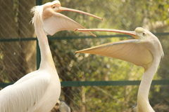 Gli uccelli di posa! Immagine Stock Libera da Diritti
