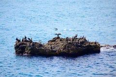 Gli uccelli di rilassamento oscillano l'acqua di mare blu Fotografia Stock