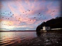 Gli uccelli di volo degli uccelli del tramonto della rimessa per imbarcazioni volano Fotografia Stock Libera da Diritti