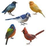 Gli uccelli hanno messo la pittura dell'acquerello Fotografia Stock Libera da Diritti