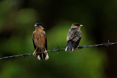 Gli uccelli hanno ottenuto bagnati nella pioggia Fotografia Stock