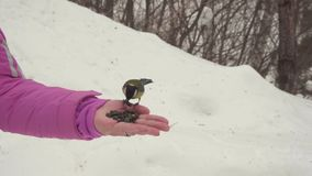 Gli uccelli in mano del ` s delle donne mangiano i semi archivi video