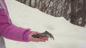 Gli uccelli in mano del ` s delle donne mangiano i semi video d archivio
