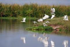Gli uccelli nel cratere di Ngorongoro Fotografie Stock