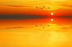 Gli uccelli nel lago Fotografia Stock