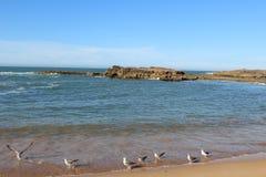 Gli uccelli nel mare Fotografia Stock