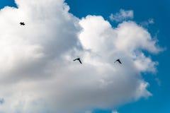 Gli uccelli profilano nel cielo blu Fotografia Stock Libera da Diritti