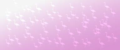 Gli uccelli rosa del fenicottero di pendenza del fondo dell'intestazione modellano immagine stock libera da diritti