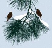 Gli uccelli si siedono su un ramo del pino nel giorno di inverno Fotografia Stock Libera da Diritti