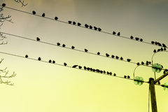 Gli uccelli si sono appollaiati su collegare Fotografie Stock