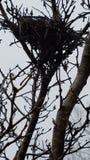 Gli uccelli solitari annidano fotografie stock libere da diritti