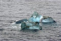 Gli uccelli sopra il piccolo ghiacciaio ghiacciano a Spitsbergen, Norvegia Immagini Stock