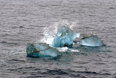 Gli uccelli sopra il piccolo ghiacciaio ghiacciano a Spitsbergen, Norvegia Fotografia Stock Libera da Diritti