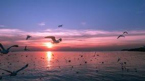 Gli uccelli sorvolano il fiume Fotografia Stock