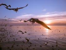 Gli uccelli sorvolano il fiume Immagine Stock Libera da Diritti