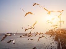 Gli uccelli stanno volando Fotografia Stock