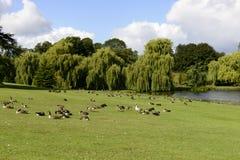 Gli uccelli sui prati in Leeds Castle parcheggiano, Maidstone, Inghilterra Immagini Stock Libere da Diritti
