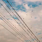 Gli uccelli sulla linea elettrica cablano contro cielo blu con il backgroun delle nuvole Fotografia Stock