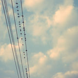 Gli uccelli sulla linea elettrica cablano contro cielo blu con il backgroun delle nuvole Fotografia Stock Libera da Diritti