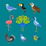 Gli uccelli vector l'illustrazione stabilita isolata Fotografie Stock Libere da Diritti
