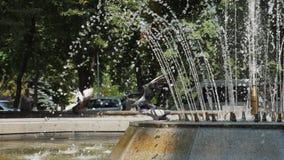 Gli uccelli vengono a bere l'acqua da una cascata stock footage