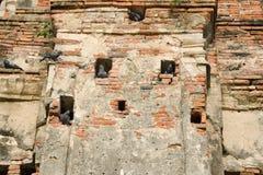 Gli uccelli vivono nel foro del muro di mattoni in un vecchio tempio contemporaneo in Ayuthaya Tailandia Immagini Stock