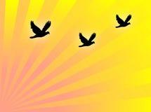 Gli uccelli volano illustrazione di stock