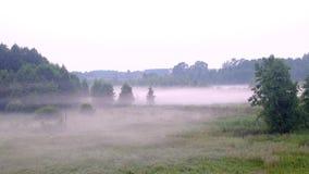 Gli uccelli volano in una foresta nebbiosa stock footage