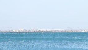 Gli uccelli volano in uno stormo sopra l'acqua di mare molto in basso, migrazione degli uccelli selvaggi video d archivio