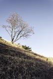 Gli ultimi raggi toccano le alte montagne in autunno Immagini Stock