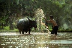 Gli uomini agricoli tailandesi stanno bagnando per i bufali Fotografia Stock