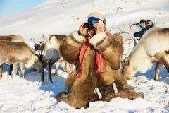 Gli uomini di sami cerca le renne con binoculare nell'inverno profondo della neve nella regione di Tromso, Norvegia del Nord Fotografia Stock
