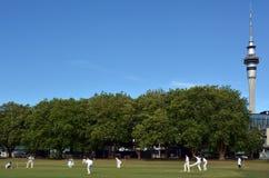 Gli uomini giocano il cricket nel parco di Victoria Auckland, Nuova Zelanda Immagine Stock