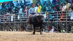 Gli uomini non identificati controllano il loro bufalo per correre in uno sport di corsa Fotografie Stock Libere da Diritti