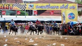 Gli uomini non identificati controllano il loro bufalo per correre in uno sport di corsa Immagine Stock Libera da Diritti