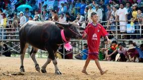 Gli uomini non identificati controllano il loro bufalo per correre in uno sport di corsa Fotografia Stock Libera da Diritti