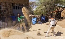 Gli uomini spulano il raccolto con le pale sul vento Weita Valle di Omo l'etiopia Fotografie Stock Libere da Diritti