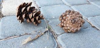 Gli urti del pino si trovano sulla terra fotografia stock